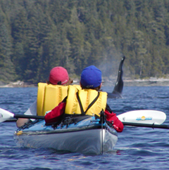 Sea Kayaking with Killer Whales in Johnstone Strait, British Columbia
