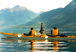 Sea Kayaking and Killer Whales - Johnstone Strait, British Columbia