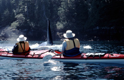 Sea Kayaking with Killer Whales, Johnstone Strait, British Columbia