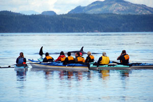 Sea kayak whale watching in Johnstone Strait, Vancouver Island